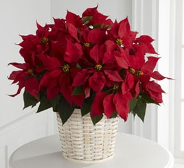Christmas Poinsettia Basket Milwaukee